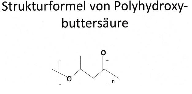 PHB_Struktur